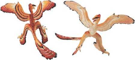 Microraptor Dinosaur Toy Replica At Animal World 174