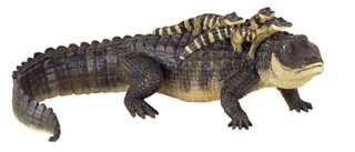 Alligator Toy Miniature Alligator With Babies At Animal World 174