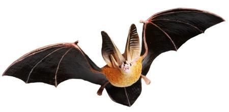 bat toy replica townsend big ear