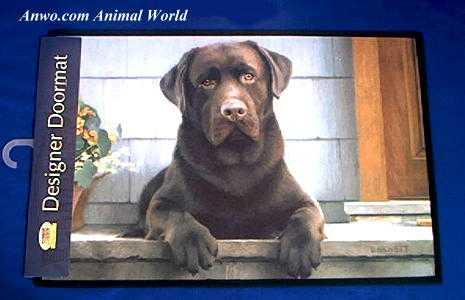Tremendous Chocolate Lab Doormat At Anwo Com Animal World Door Handles Collection Dhjemzonderlifede