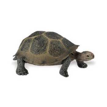 Desert Tortoise Turtle Toy Miniature Replica At Animal World 174
