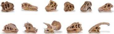 dinosaur-skulls-687404.jpg