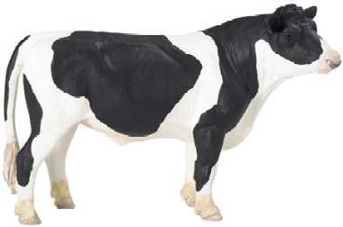 Bull Toy Holstein Cow Miniature At Animal World 174