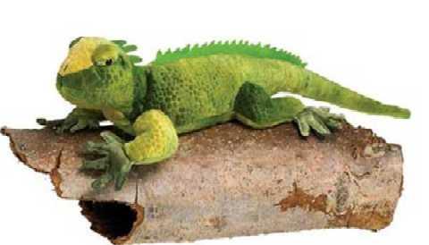 Iguana Stuffed Animal Plush Green At Animal World 174