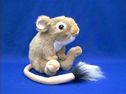 Kangaroo Rat Stuffed Animal Plush at Animal World®