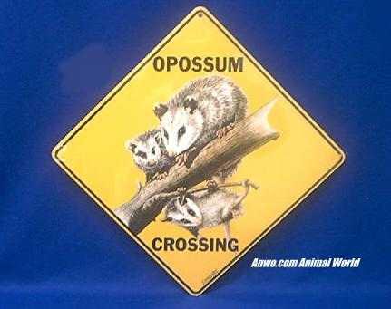 Opossum Crossing Sign At Animal World 174