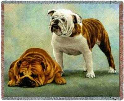 bulldog blanket throw tapestry afghan sorry