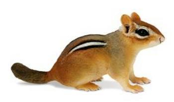 chipmunk toy miniature safari