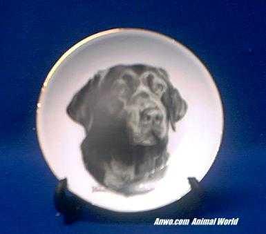 chocolate lab plate porcelain
