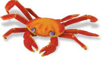 sally lightfoot crab toy gallapagos