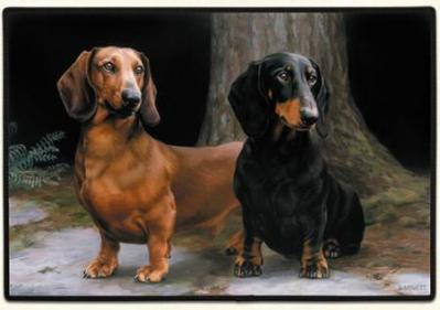 dachshund doormat welcome mat usa