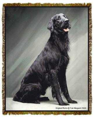 flat coated retriever blanket throw tapestry afghan