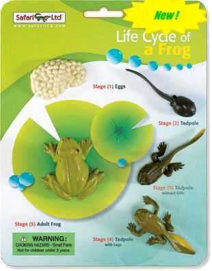 frog life cycle toy miniature
