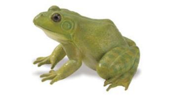 frog-toy-animal.jpg