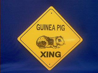 guinea pig crossing sign