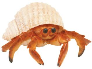 hermit crab toy