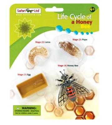honey bee life cycle toy miniature
