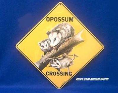 opossum crossing sign color