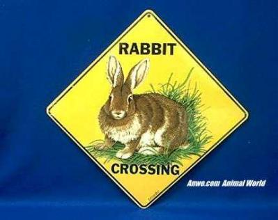 rabbit crossing sign