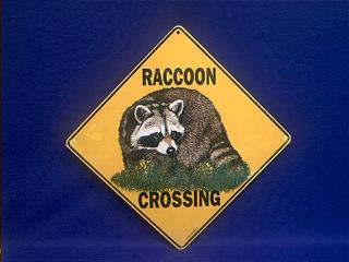 raccoon crossing sign