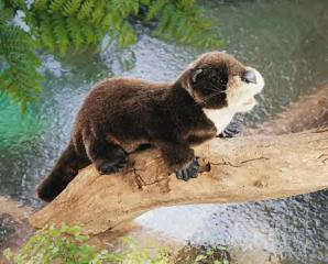 river otter puppet