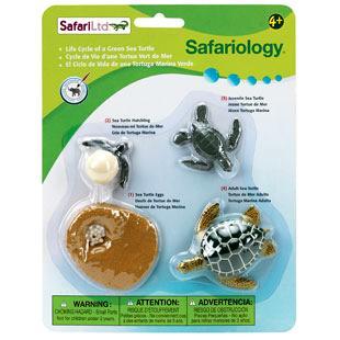 green sea turtle life cycle toy replica