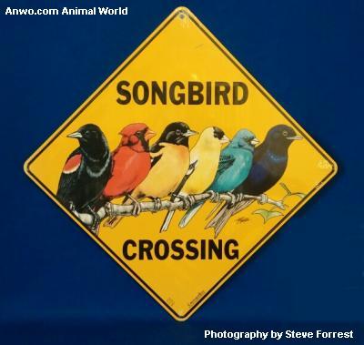songbird crossing sign