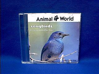 bird sound nature