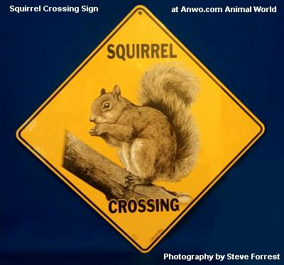 squirrel crossing sign outdoor