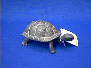 turtle toy galapagos baby