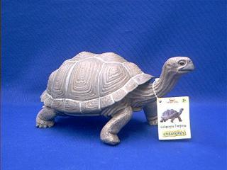 galapagos turtle toy