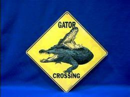 alligator_crossing_3.JPG