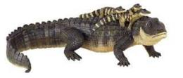 alligator with babies toy miniature