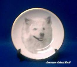 american eskimo spitz plate porcelain