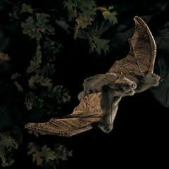 bat puppet large