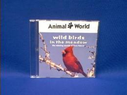 bird singing sound