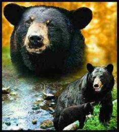 black bear blanket throw tapestry afghan