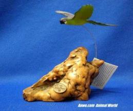 blue gold macaw figurine john perry