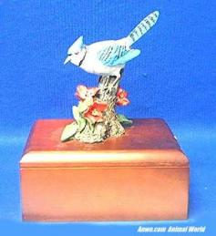 blue jay music jewelry box