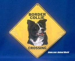 border collie crossing sign