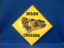buffalo crossing sign