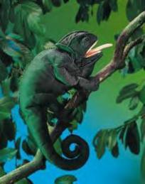 chameleon puppet