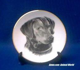 chesapeake bay retriever plate porcelain