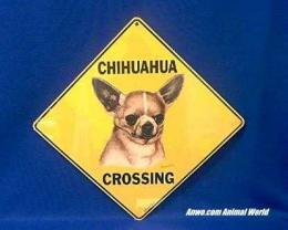 chihuahua crossing sign