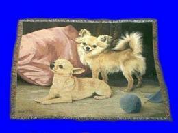 chihuahua blanket