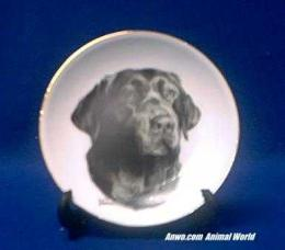 chocolate lab plate porcelain
