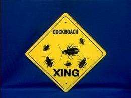 cockroach sign