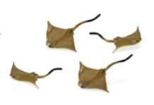cownose sting ray mini toy good luck miniature