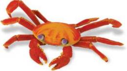sally lightfoot crab toy gallapagos