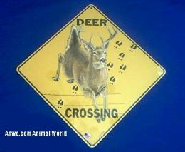 deer crossing sign jumping